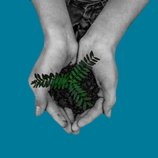 Delicate plant held in a woman's hands | The BIID sustainability strategy